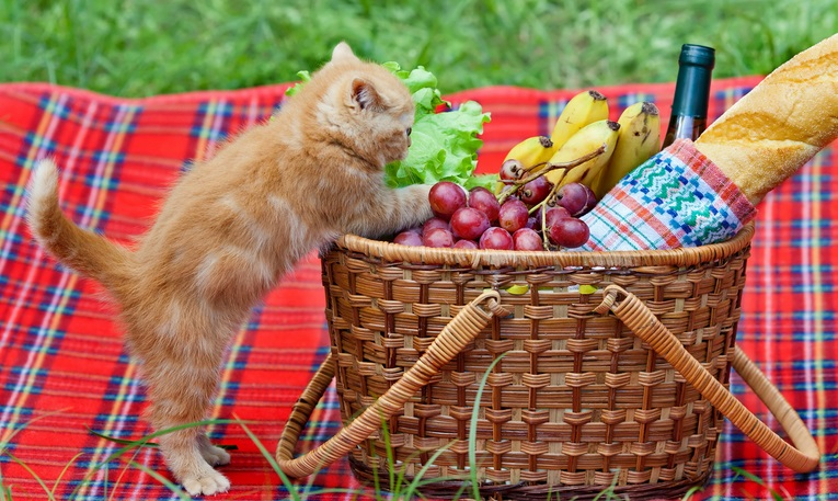 Kittens can not eat grapes