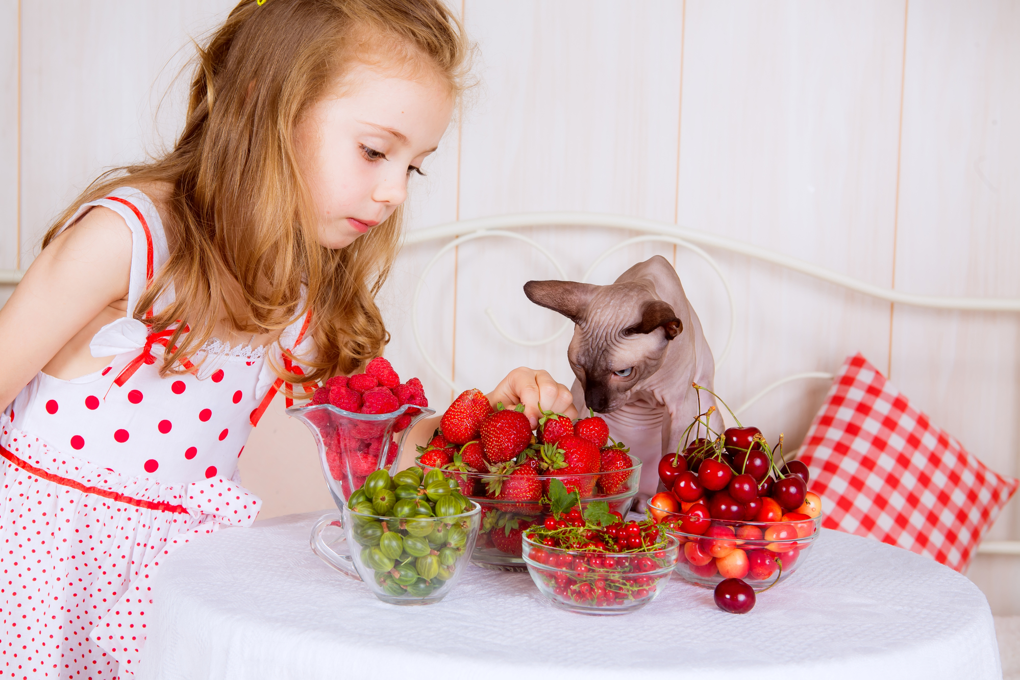 should your cat eat a strawberry